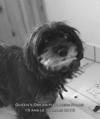 Multi Championne Queen's Dream of Havanese Stars - 15 ans