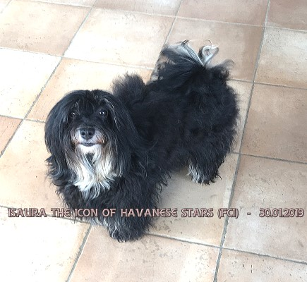 Isaura the Icon of Havanese Stars - M. Seeberger